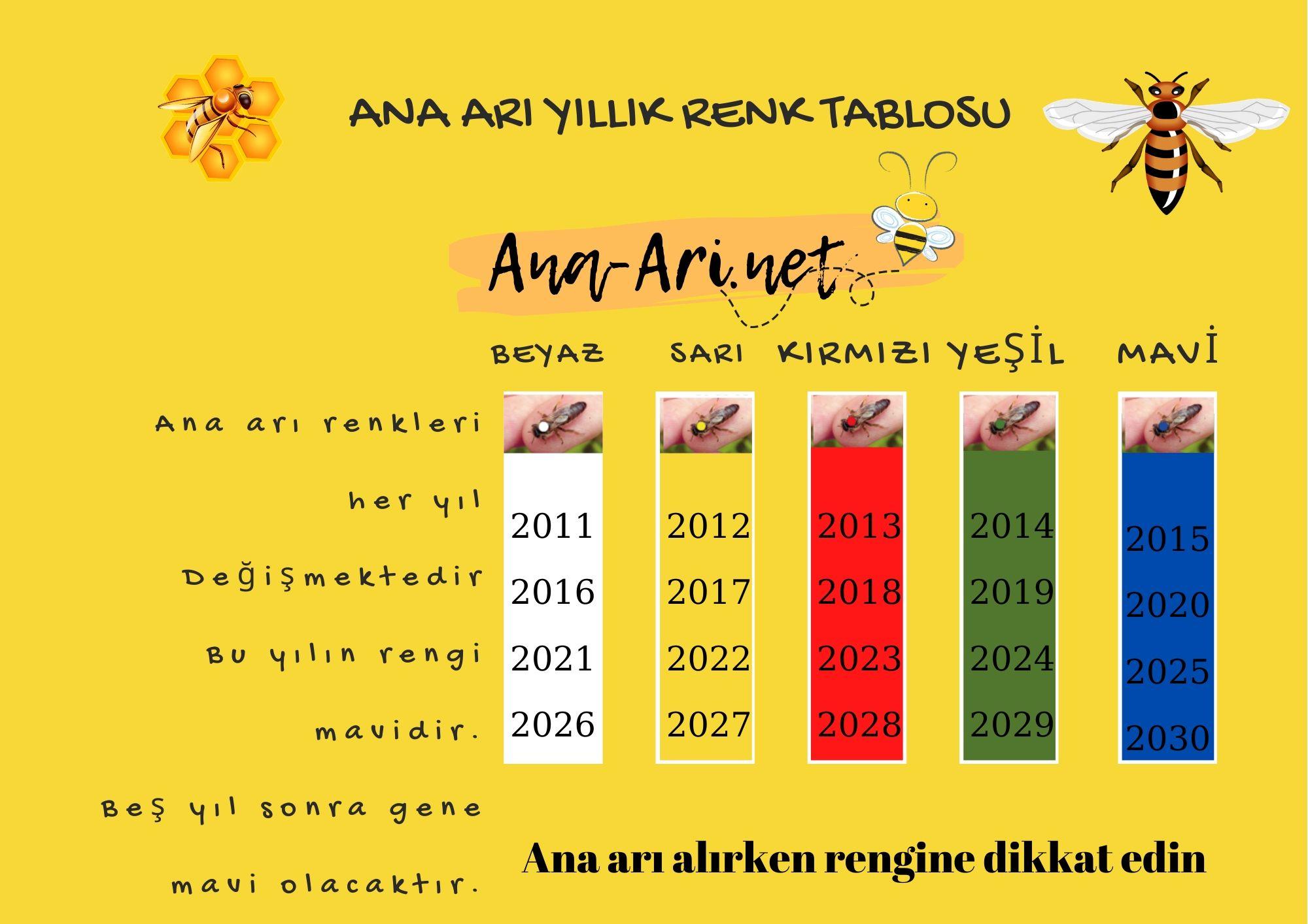 ana arı renkleri