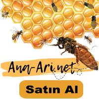 ana arı satın al